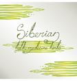 Siberian folk medecine herbs set vector image vector image