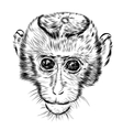 Sketch monkey face Hand drawn doodle vector image