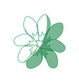 beautiful flower decoration vector image
