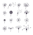 Dandelion Fluffy Flower and Seeds Set vector image vector image