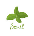 fresh green basil leaves on white background vector image vector image
