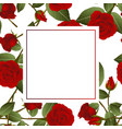 red rose on white banner card vector image vector image
