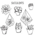 set hand drawn succulent plants vector image