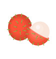 whole and cross section of rambutan vector image vector image