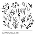 botanical collection vector image vector image