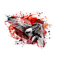 color of a flying eagle vector image vector image