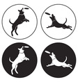dog-frisbee vector image vector image
