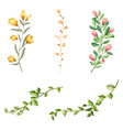 flower and leaf collection watercolor isolated vector image vector image