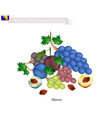 plum and grape the popular fruit in bosnia and he vector image vector image