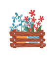 pots with colorful flowers in wooden box vector image vector image