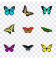 set of moth realistic symbols with yello-wing vector image vector image