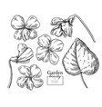 violet flower drawing hand drawn engraved vector image vector image