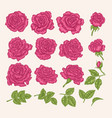 collection pink roses flowers leaves and buds vector image vector image