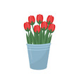 gray metal bucket with red tulips bouquet of vector image