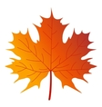 Maple tree leaf vector image vector image