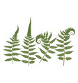 set of silhouettes of a green forest fern vector image