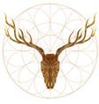 sketch of deer skull for tattoo printing on vector image vector image