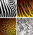 animal skin variation vector image