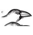 hawfinch beak vintage