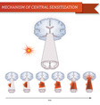Infographic mechanism of central sensitization vector image