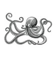 octopus hand drawing vintage engraving on white vector image