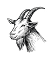 head of goat vector image vector image