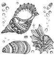 Set of decorative seashells isolated on white fond vector image