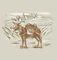 wineyard and a donkey vector image