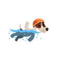 cute jack russell terrier athlete swimming in pool