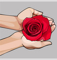 hands gently holding a bud of a red rose vector image vector image