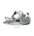 pomegranate hand drawing vintage clip art vector image