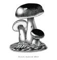 antique engraving porcini mushroom hand draw vector image vector image