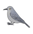 drawing mockingbird vector image vector image