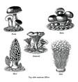 antique engraving top edible mushroom vector image vector image