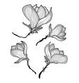 Beautiful magnolia flowers vector image