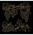 Gold grape branches vector image vector image