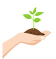 hand holding a dirt and young tree vector image vector image