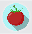 red tomatoe on a white space with shadows vector image