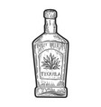 tequila bottle sketch vector image vector image