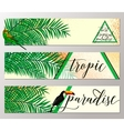 tropical paradise banner vector image vector image