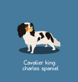 cavalier king charles spaniel dog design vector image vector image