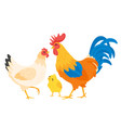chicken family hen rooster vector image vector image