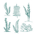 ink hand drawn seaweed collection various vector image vector image