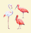 watercolor ibis and flamingo set vector image vector image