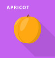 apricot icon flat style vector image