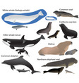 collection of marine mammals and its cubs vector image vector image
