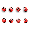Four lady bugs with shadows and isolated on white vector image