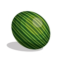 icon watermelon fruit design vector image