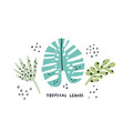 exotic leaves hand drawn flat set vector image vector image