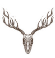 sketch of deer skull outline for tattoo printing vector image vector image